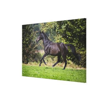 草原の茶色の馬のランニング キャンバスプリント
