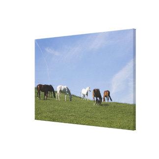 草原の馬の群れ キャンバスプリント