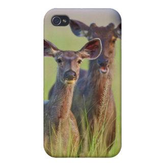 草原のSambarのシカ、Corbettの国立公園 iPhone 4/4Sケース