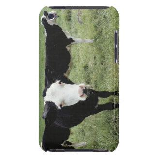 草原、ノバスコシア、カナダで牧草を食べている牛 Case-Mate iPod TOUCH ケース