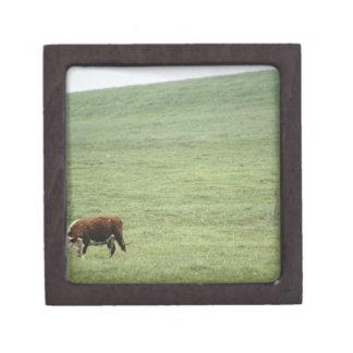 草原、ノバスコシア、カナダで牧草を食べることを脅かして下さい ギフトボックス