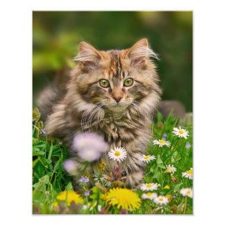 草原Paperprintのかわいいメインのあらいぐまの子ネコ猫 フォトプリント
