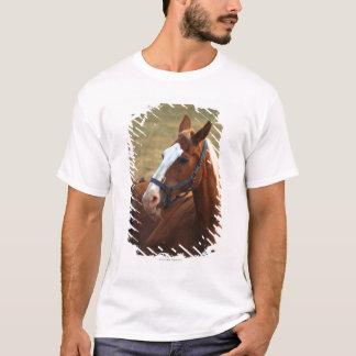 草、クローズアップで休んでいる馬 Tシャツ