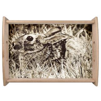 草、グランジなセピア色のCottontailウサギ トレー