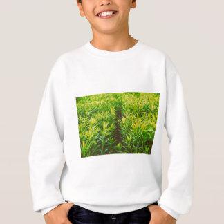草 スウェットシャツ