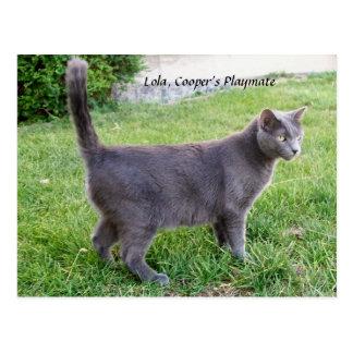 草-郵便はがきのLolaの子猫のロシアのな青猫 ポストカード