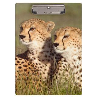 草、Ngorongoroの保存にあっているチータ クリップボード