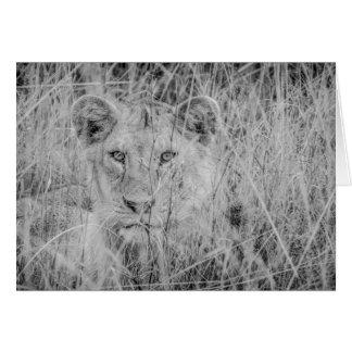 草Notecardsのライオン カード