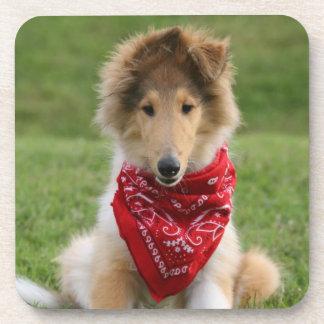 荒いコリーの小犬のかわいく美しい写真 コースター