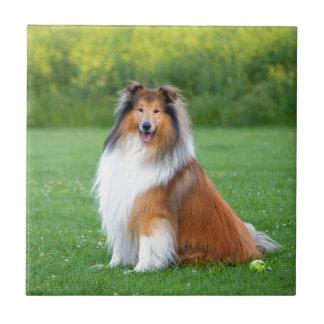荒いコリー犬の美しい写真のセラミックタイル タイル