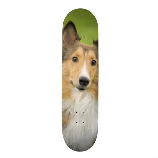 荒いコリー、犬、動物 20.6CM スケートボードデッキ