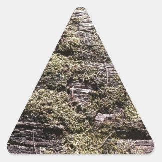 荒野で腐る落ちたな木の乾燥のコケ 三角形シール