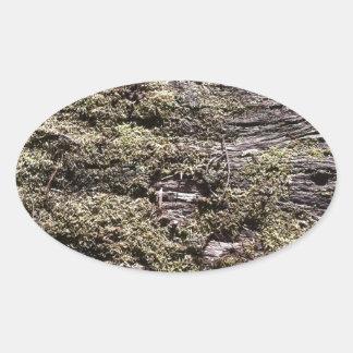荒野で腐る落ちたな木の乾燥のコケ 楕円形シール
