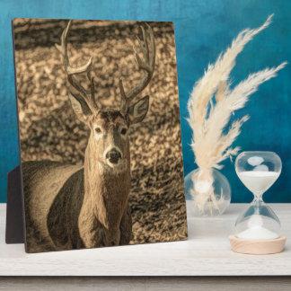 荒野のカムフラージュのoutdoorsmanのオジロ鹿シカ フォトプラーク