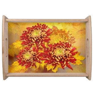 菊の栄光-トレイ トレー