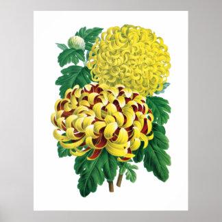 菊の植物のプリント ポスター