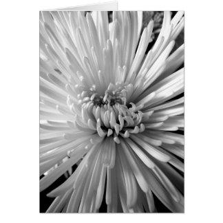 菊の花 カード