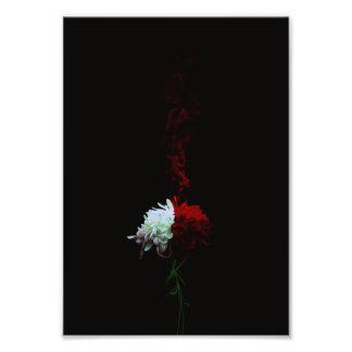 菊一凛-Chrysanthemum- フォトプリント