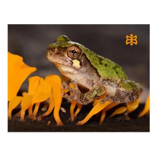 菌類のミズーリのカエル ポストカード