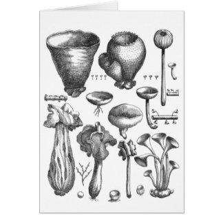 菌類 カード