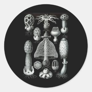菌類 ラウンドシール