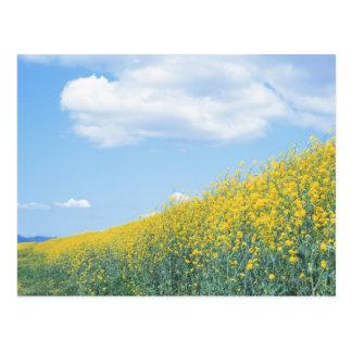 菜の花 ポストカード