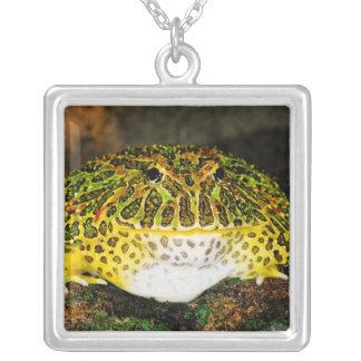 華美な角のカエル、Ceratophrysのornata、先住民 シルバープレートネックレス