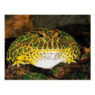 華美な角のカエル、Ceratophrysのornata、先住民 ポストカード