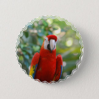 華麗で赤いオウムボタン 5.7CM 丸型バッジ