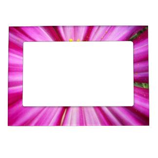 華麗なピンクのCosmo マグネットフレーム
