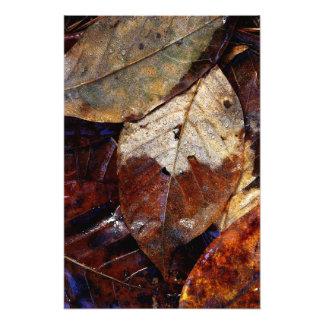 落ちたな葉 フォトプリント