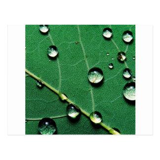 落ちたなleaf.jpgの抽象芸術色の雨滴 ポストカード