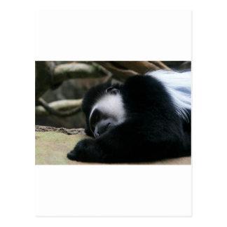 落ち着いた眠り ポストカード