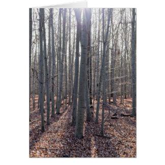 落下のブナの森林 グリーティングカード