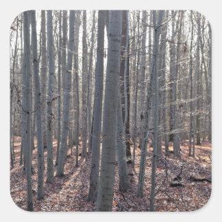 落下のブナの森林 スクエアシール