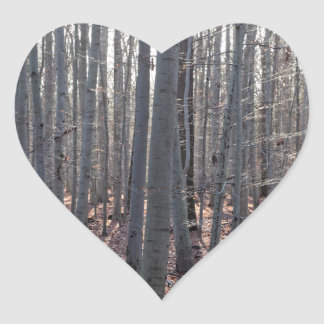 落下のブナの森林 ハートシール