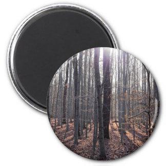 落下のブナの森林 マグネット