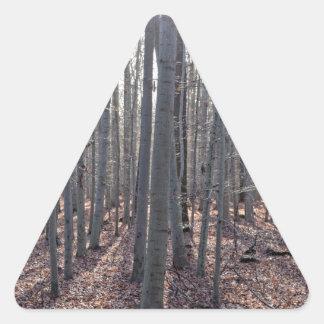 落下のブナの森林 三角形シール