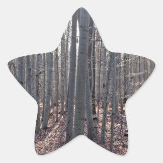 落下のブナの森林 星シール