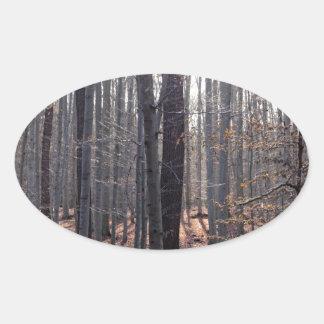 落下のブナの森林 楕円形シール
