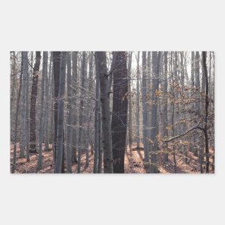 落下のブナの森林 長方形シール