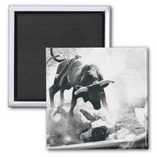 落下の後の雄牛地面のカウボーイ マグネット