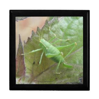 葉のギフト用の箱の緑のコオロギ ギフトボックス