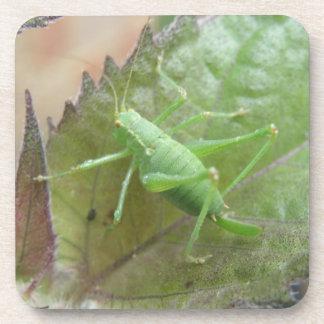 葉のコルクのコースターの緑のコオロギ コースター