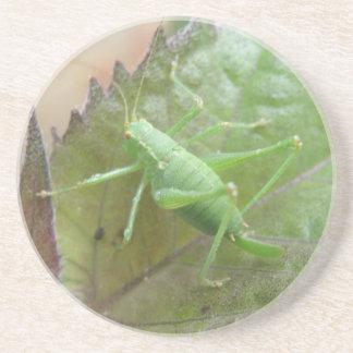 葉のコースターの緑のコオロギ コースター