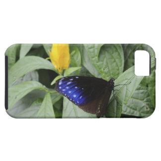 葉のストライプので青いカラス(Euploeaのmulciber)、 iPhone SE/5/5s ケース