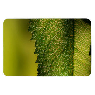 葉のマクロ マグネット