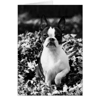 葉のマーサ-黒か白 カード