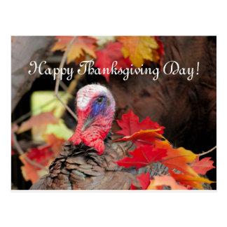 葉の感謝祭日のトルコ ポストカード
