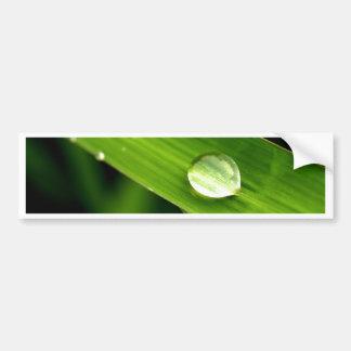 葉の水低下 バンパーステッカー